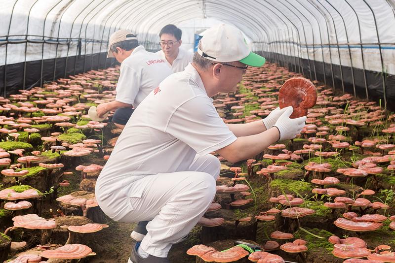 linhzhimin-farm-003