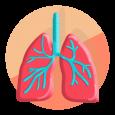 icon ระบบทางเดินหายใจ